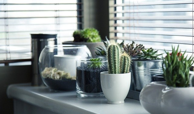 How to do Indoor Gardening: All you need to know